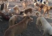منتشرکننده فیلم آزار سگها بهزودی بازداشت میشود