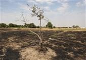 میزگرد| باغ شهری که در آتش سوخت: روزانه 16 فقره آتش سوزی به جان طبیعت قزوین می افتد