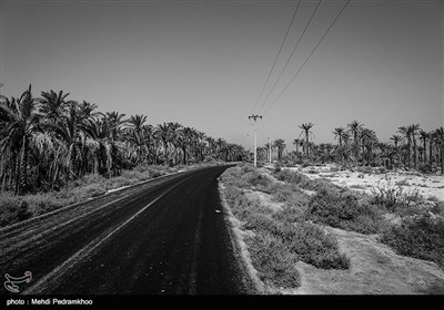 خوزستان قطب تولید خرما و رتبه نخست صادرات آن را در كشور دارد سهم این استان تولید حدود 200 هزار تن خرما است.اما در سال های اخیر میلیون ها اصله نخل در جنوب خوزستان قربانی كمبود و شوری آب شده اند