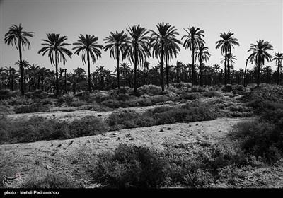 شادگان با حدود ۱۵۰ هزار نفر جمعیت در ۷۰ کیلومتری اهواز مرکز استان خوزستان واقع شده است .