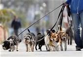 بازار داغ سگفروشی در مراغه؛ از سگ جیبی تا غول بیابانی