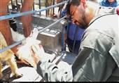 کلینیک دامپزشکی سیار برای ارائه خدمات به عشایر استان فارس راهاندازی شد