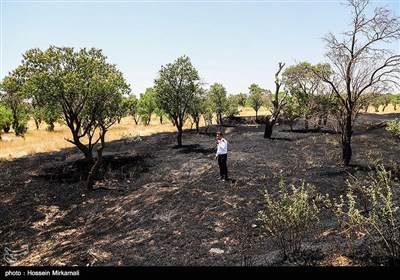 آتش سوزی باغستان یکهزار ساله سنتی قزوین