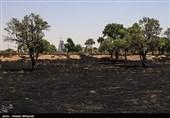 آتشسوزی در منطقه حفاظت شده دنا