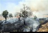 اداره کل بلاتکلیف مسئول حفاظت از ارسباران!/ «منابع طبیعی» قربانی آتش بی تدبیری «اداره کل منابع طبیعی»