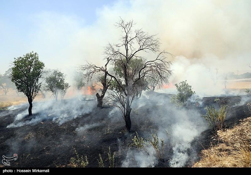 4 نفر در ارتباط با آتشسوزی جنگلهای قرهداغ دستگیر شدند