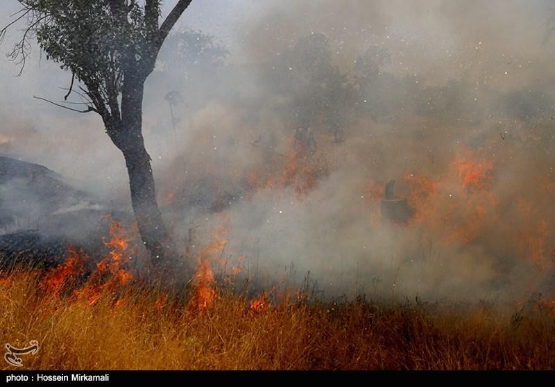 دست رد مسئولان استان فارس به راهکاری علمی پیشگیری از حریق جنگلها
