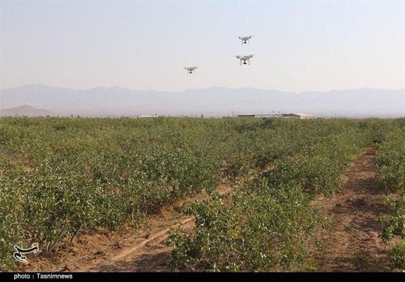 خسارت سرمای بهاری به کشاورزی استان فارس؛ 30 تا 60 درصد باغات پسته سروستان آسیب دید