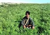 شهادت رزمنده فاطمیون، «سید ناظر حسین موسوی» در سوریه+فیلم