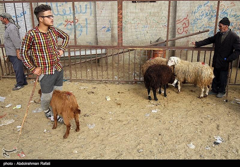 در عید قربان مسلمانان در سراسر جهان در این روز، گوسفند، گاو یا شتری را قربانی کرده و گوشت آنرا بین همسایگان و مستمندان تقسیم میکنند.