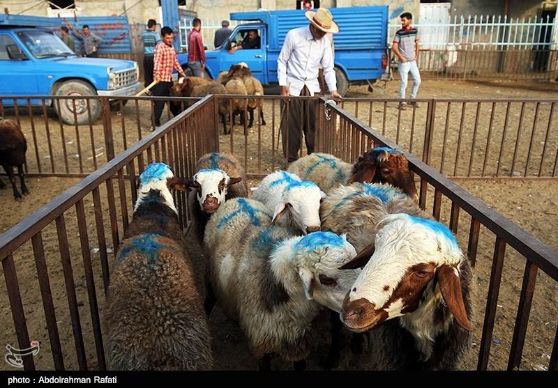 بازار خريد و فروش دام در آستانه عيد قربان براي ذبح در اين عيد بزرگ مسلمانان در سراسر كشور پر رونق است.