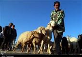 بازار خرید و فروش دام در بجنورد به روایت تصویر