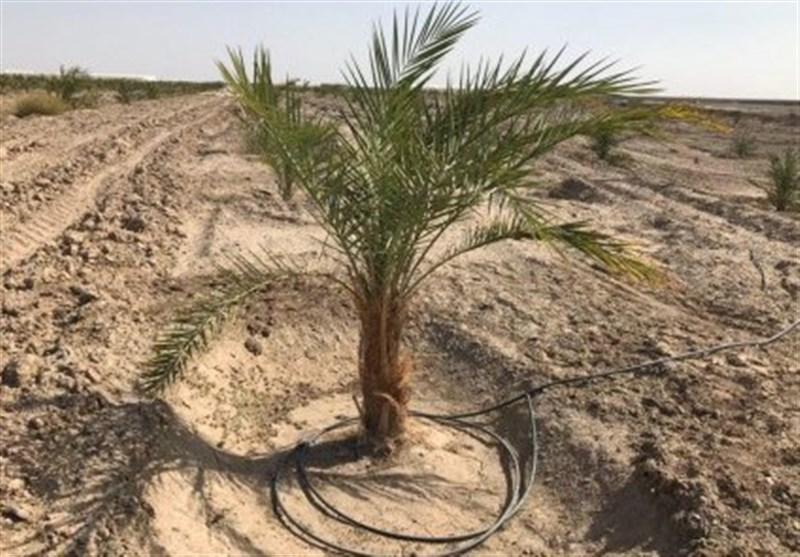 اجرای طرح نخلستان استان بوشهر در ستاد فرماندهی اقتصاد مقاومتی تصویب شد