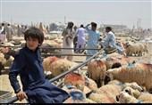 بازار دام زاهدان در روز عید قربان به روایت تصویر