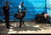 تهران| عرضه و ذبح دام در شهرستان ری ممنوع شد