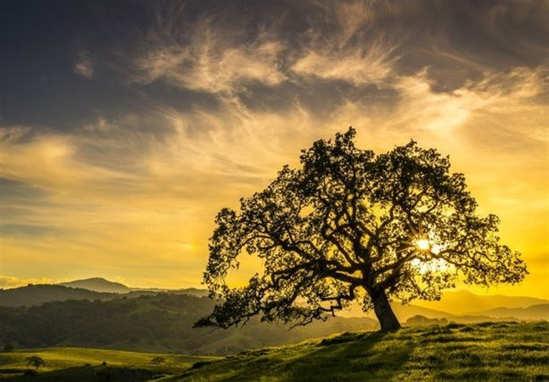 Study Suggests Trees' Potential to Slow Global Warming in Next 100 Years