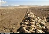 استاندار خوزستان: چغندر قند جایگزین مناسبی برای محصول نیشکر در فصول خشک است