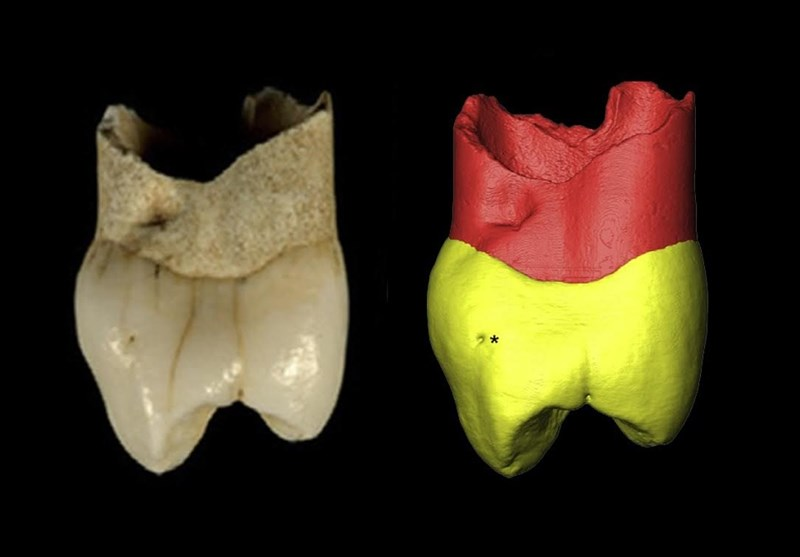 Neanderthal Tooth Unearthed near Iran's Zagros Mountain