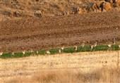 Sootav Wildlife Refuge, Bukan, Iran