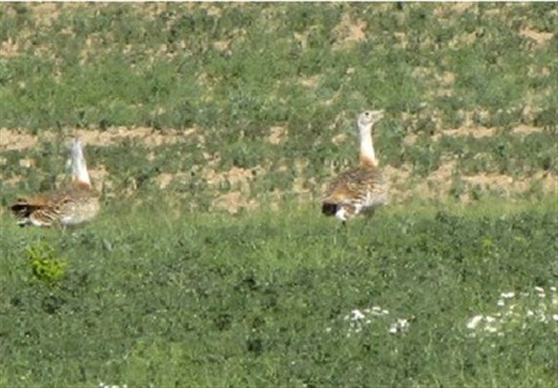 Sootav Wildlife Refuge, Bukan, Iran - Tourism news