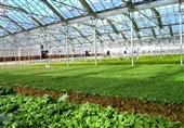 30 درصد تولیدات گلخانهای کشور در استان تهران انجام میشود