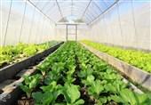 کشت گلخانهای راه میان بر توسعه صنعت کشاورزی آذربایجان غربی
