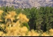 اصفهان  بستن راه تنفس زمین با پروژههای غیرکارشناسی؛ «کشت در اراضی شیبدار» طرحی که جنگلها را نابود میکند