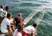 صید میگو در آبهای خلیج فارس ممنوع شد