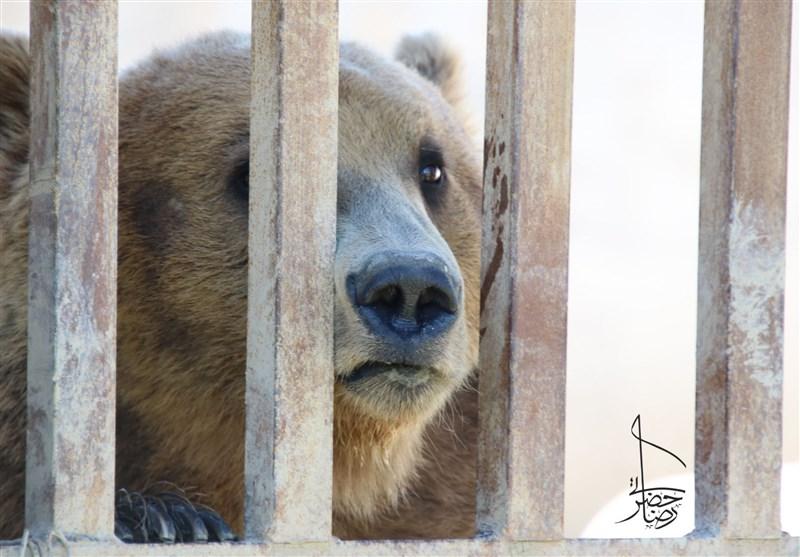 فراموششده در قفسهایی متروک؛ نقدی بر باغ وحشهای کشور