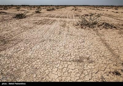 نهال کاری 4 هزار هکتار زمین توسط بسیج سازندگی در خوزستان