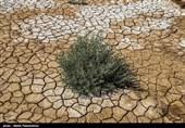 پروژههای نهالکاری در حاشیه دریاچه ارومیه با مشکل تامین آب روبه رو است