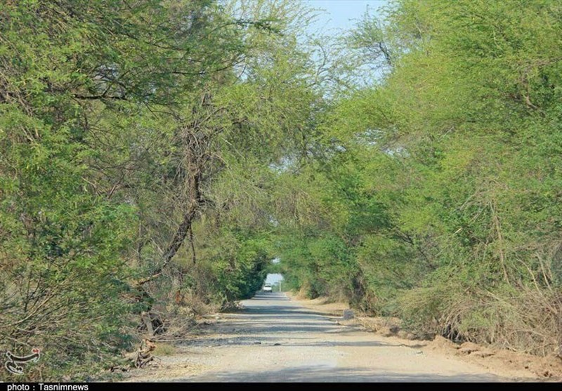 اهواز| جنگلهای «خسرج» حمیدیه ظرفیتی محروم در حوزه گردشگردی