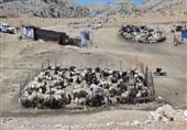 سرانه دام عشایر استان سمنان 3 برابر سرانه کشوری است