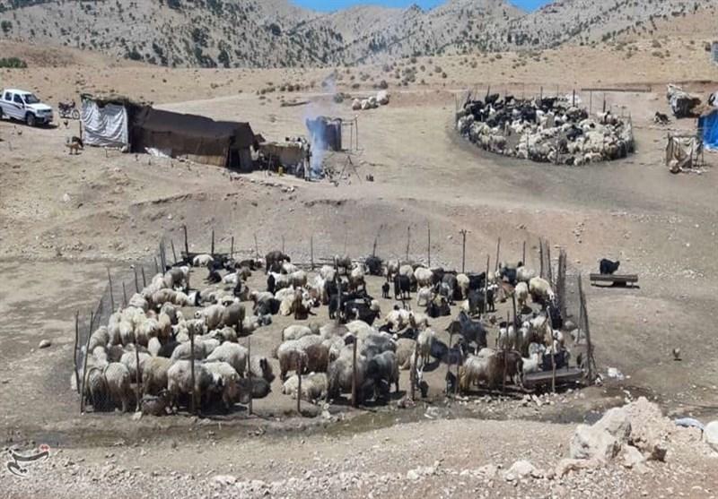 زیباییهای زندگی عشایر کوچنشین کهگیلویه و بویراحمد به روایت تصویر