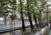 مطالعه تعیین ارزش اکولوژیک درختان تهران