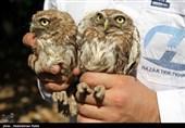 رهاسازی 60 پرنده شکاری در ارتفاعات همدان
