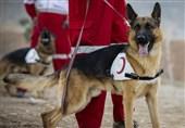 تلاش ناکام سگهای هلال احمر برای یافتن دختر 2 ساله+ تصویر کودک