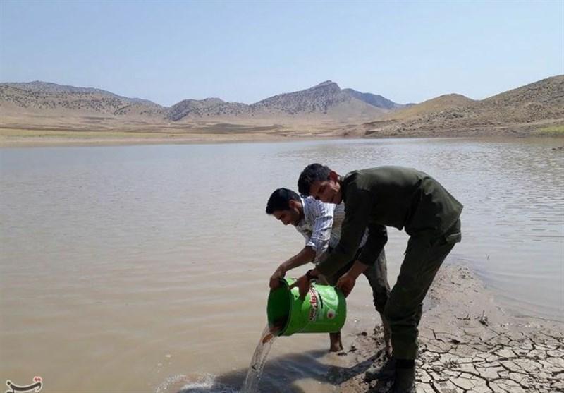 نجات ماهیان در آستانه مرگ رومشکان؛ بیشاز 1000 قطعه ماهی رهاسازی شد