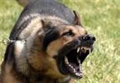 تهران| حمله سگهای نگهبان به اراذل و اوباش متواری!