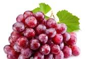 انسولین سازهای طبیعی را بیشتر بشناسید