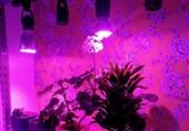 ساخت لامپ رشد گیاه ساده