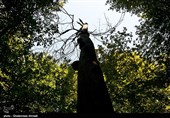 آثار طبیعی جنگلهای هیرکانی گیلان در فهرست آثار ملی کشور ثبت میشود