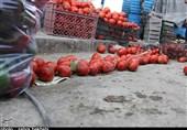 تراژدی ورشکستی در انتظار کشاورزان جنوب کرمانی / دلالان حاصل دسترنج گوجهکاران را با قیمت اندک خریداری میکنند
