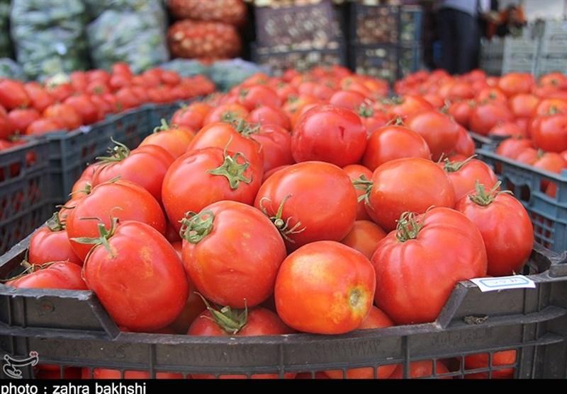 وضعیت گوجه فرنگی در استان لرستان قرمز شد/ کیلویی 13 هزار تومان در فصل برداشت؟!