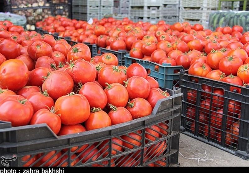 خراسان جنوبی|گرانی گوجه فرنگی ربطی به بنزین ندارد علت سرما زدگی است
