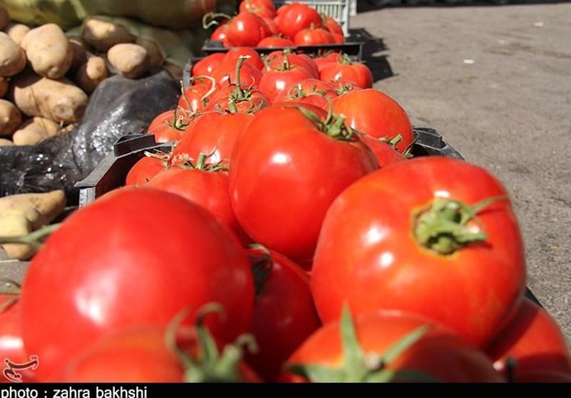 قیمت گوجه تا دو هفته دیگر 2500 تومان میشود