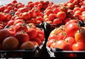 چرا قیمت گوجه سقوط کرد؟