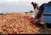 تسهیلات کم بهره برای احداث گلخانه در اصفهان پرداخت میشود