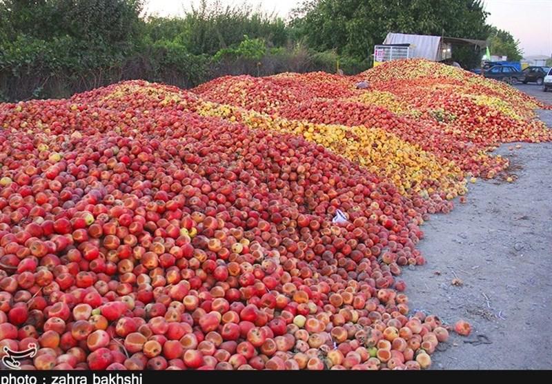 تکرار اوضاع بیسروسامان بازار سیب در آذربایجان غربی+فیلم