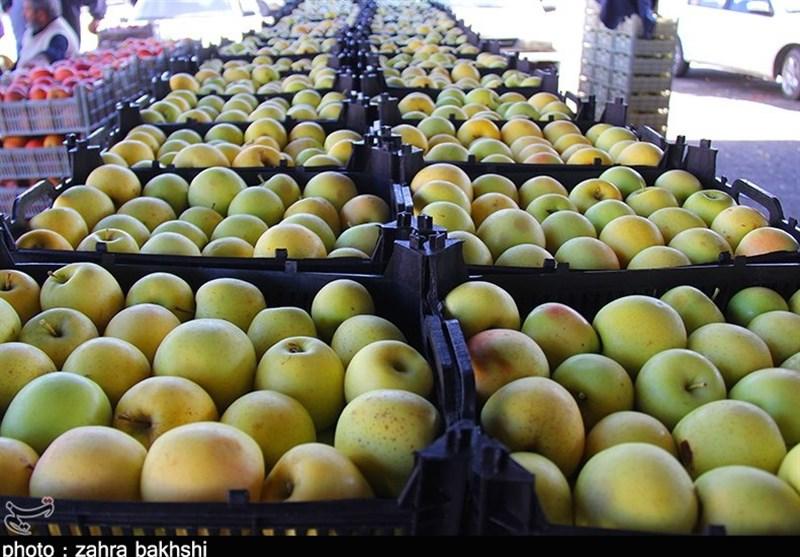 انباشت 500 هزار تن سیب در سردخانههای آذربایجانغربی؛صادرات سیب با مشکل مواجه شده است